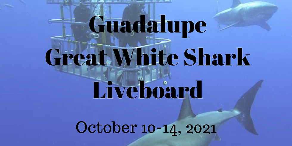 Great White Shark Dive Trip - Guadalupe