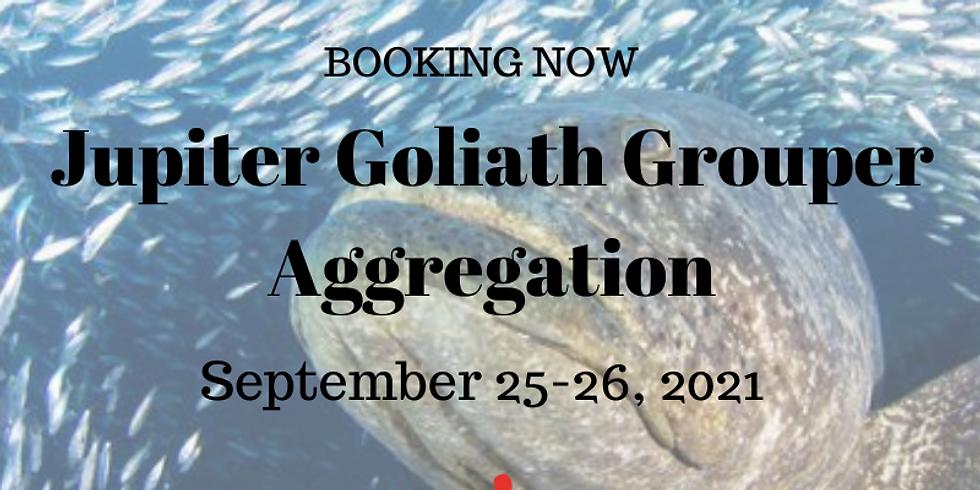 Jupiter Goliath Grouper    Aggregation September 25-26, 2021