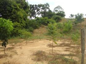 Fazenda Jovem Arminda, de Ieda Coutinho Farah