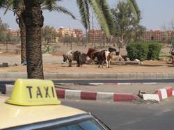 HÔTELS DU MONDE, Marrakech