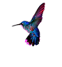 colibri png.png