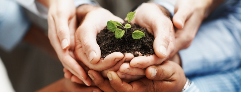 photodune-202925-business-development-hands-holding-seedling-in-a-group-m1_edite