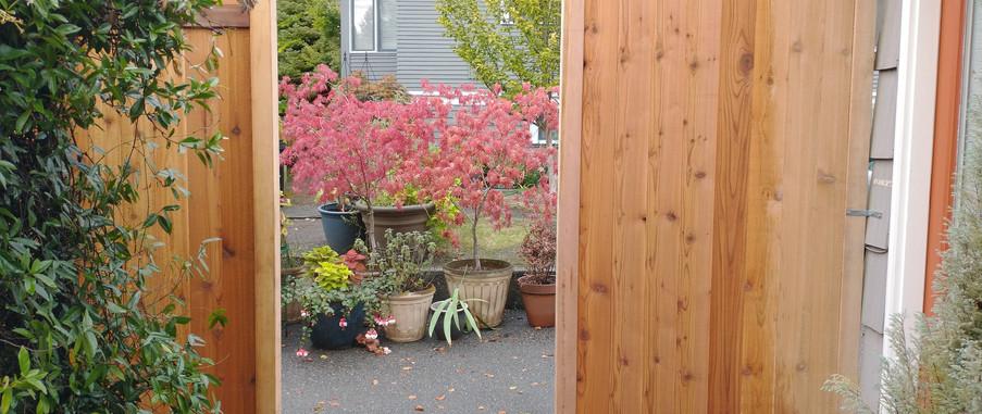 Cedar Fence Opening