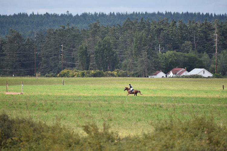 Field Galloping pony.jpeg