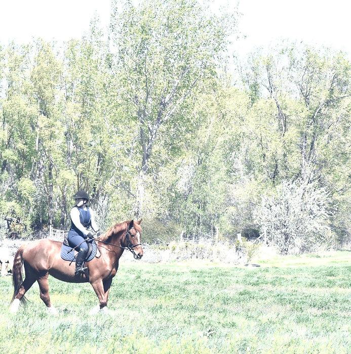 Mustang Mentorship