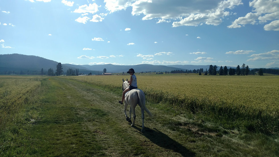 Montana view grey horse large