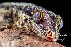Reptiles-1477-Edit.jpg
