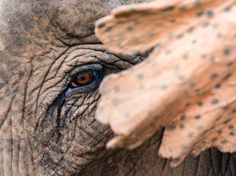 Eco Elephant Tourism