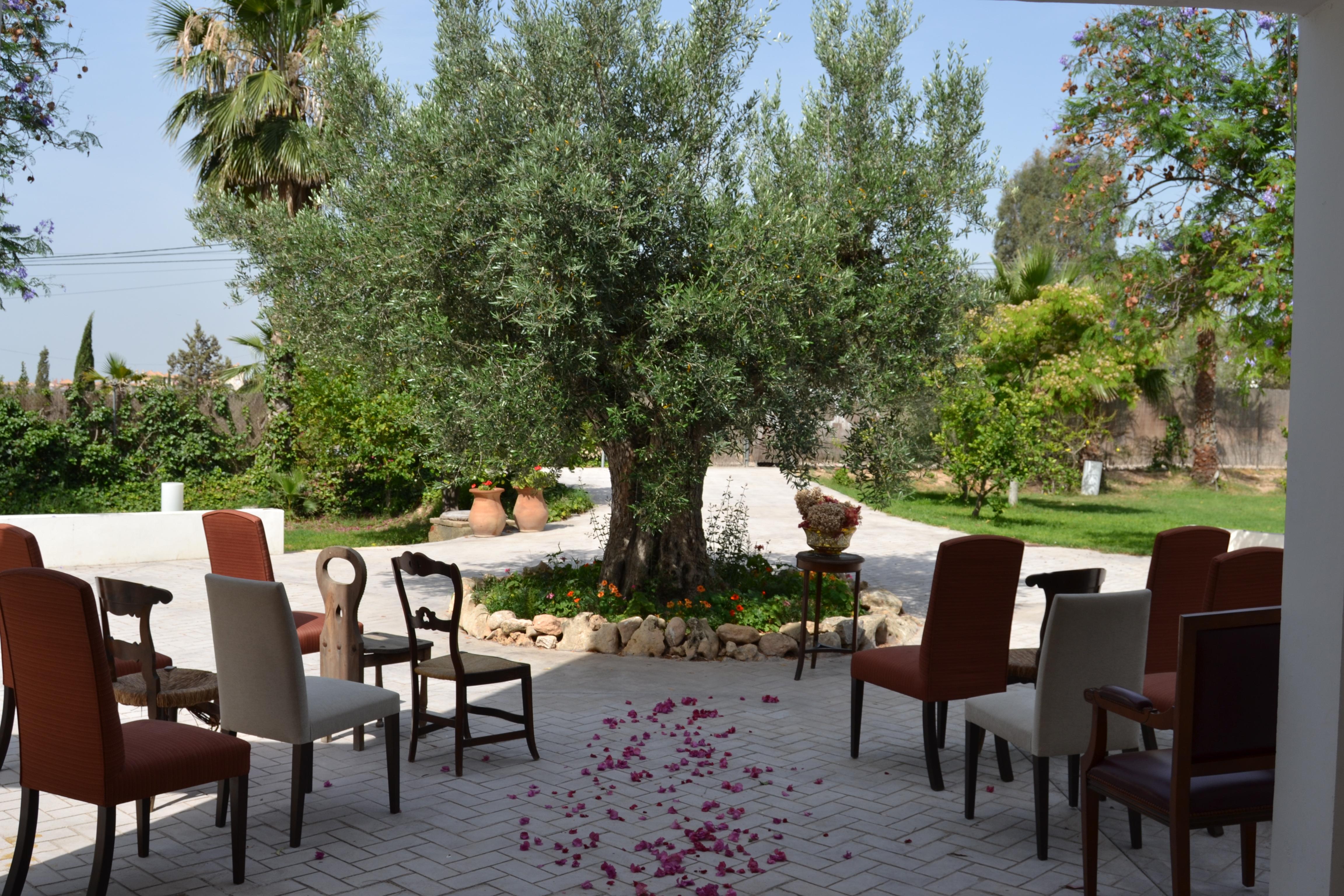 Ceremonia olivo