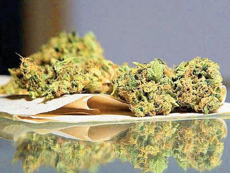 Avanza en Senado ley sobre marihuana que permite posesión de hasta 200 gramos