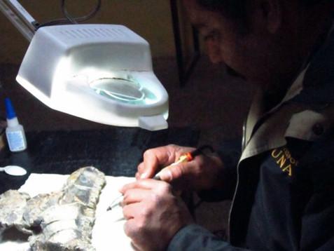 Paleontólogos del INAH y UNAM descubren nueva especie de dinosaurio