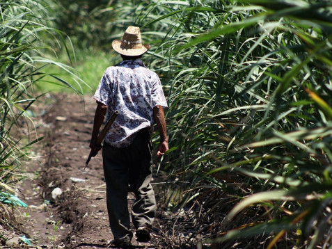 Denuncia ASF desvío sistemático de recursos al campo con EPN; ya son más de 21 mil millones