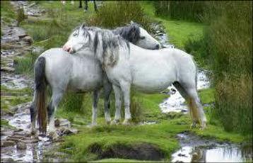 horse-grooming.jpg