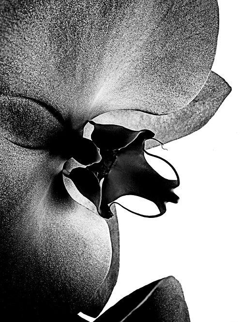 Stéphane de Bourgies - Love Orchid