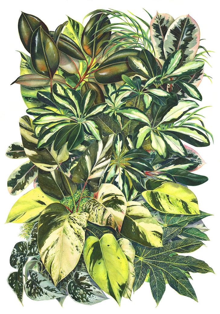 LeavesWeb.jpg