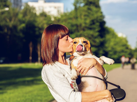 What Your Dog is Telling You: Recognizing and interpreting calming signals