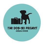 Dog-go%20project_edited.jpg