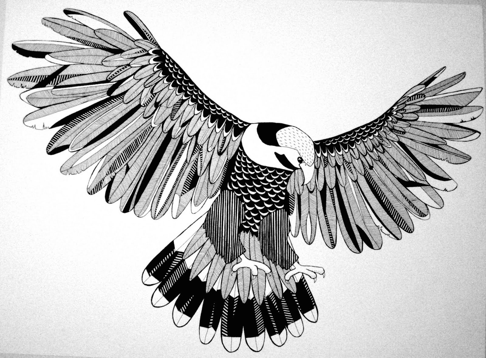 'Hawk' Illustration Pen on Paper.jpg