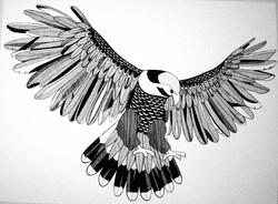 'Hawk' Illustration Pen on Paper.jpg