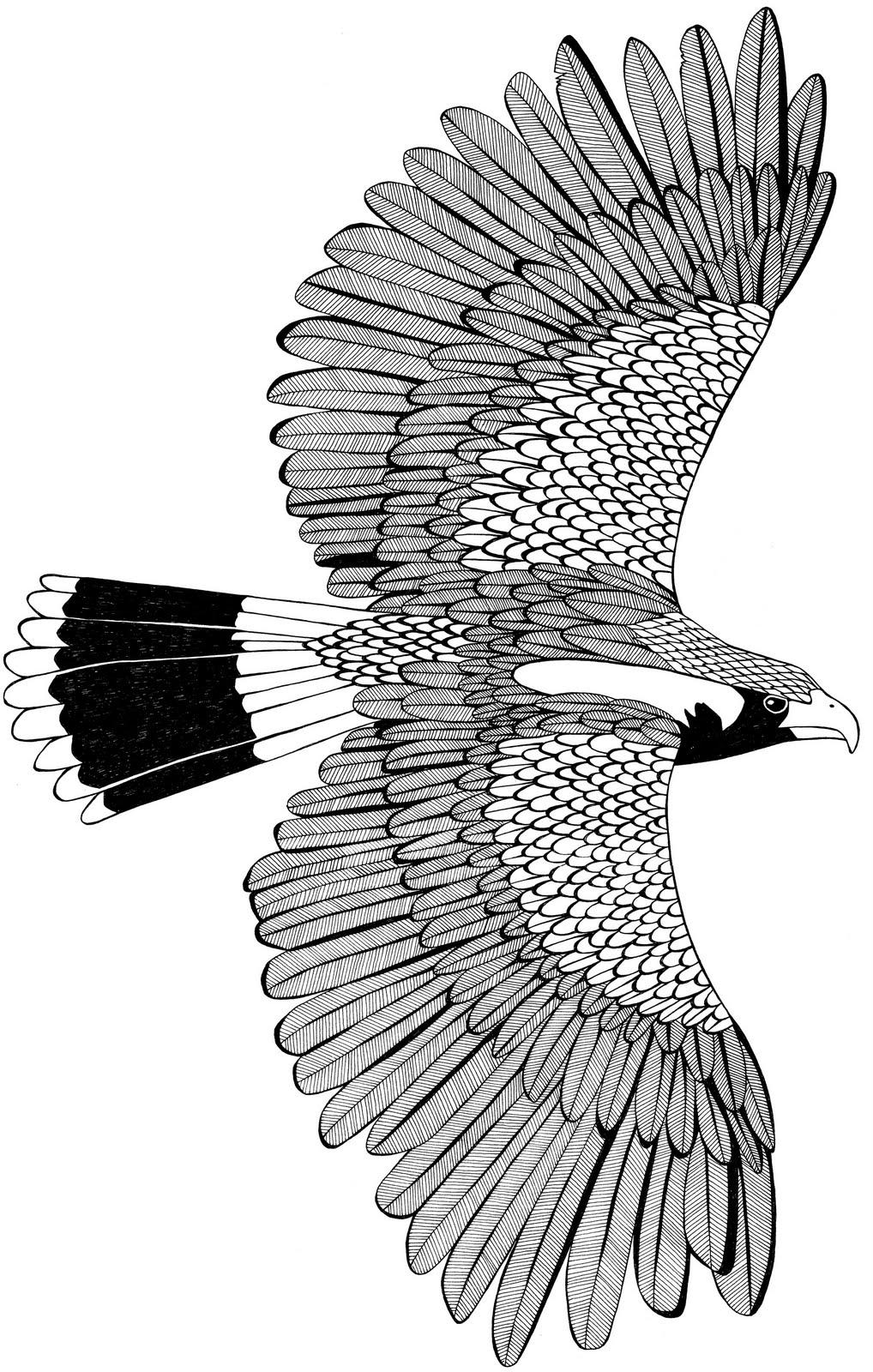 'Eagle' illustration. Pen on Paper.jpg