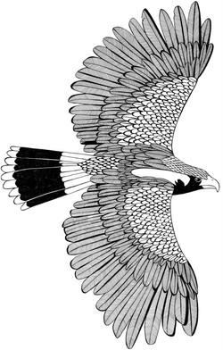 'Eagle' illustration. Pen on Paper.jpg