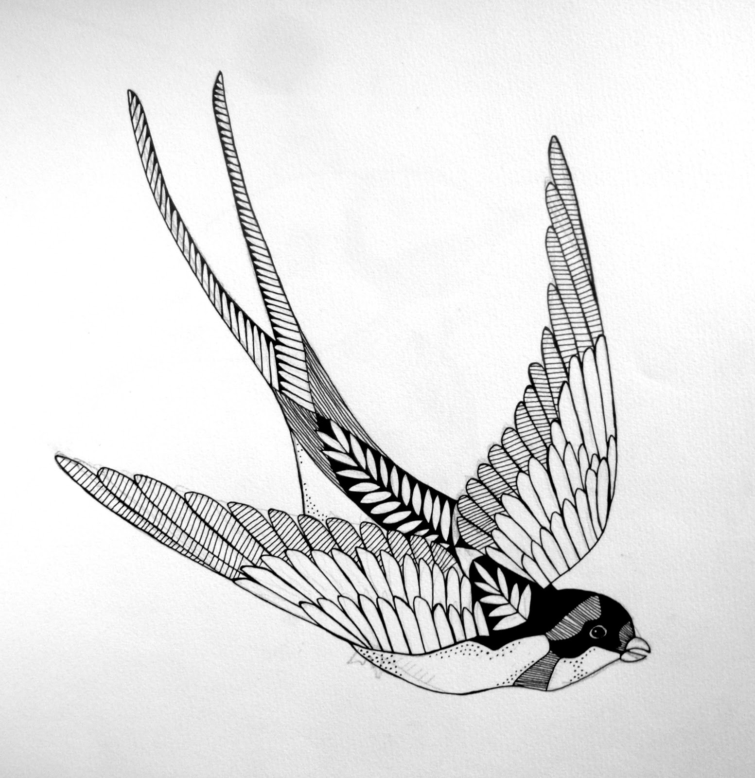 Swallow illustration (tattoo design).jpg