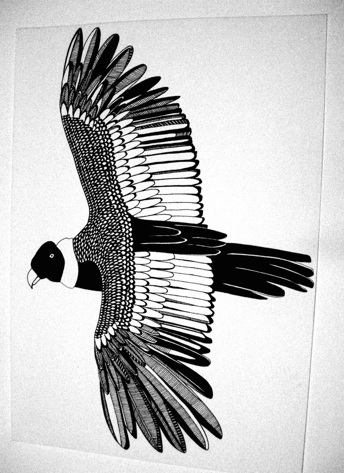 'Condor' illustration. Pen on Paper.jpg