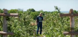 blackberries 1200.jpg