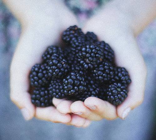 U-Pick Blackberries