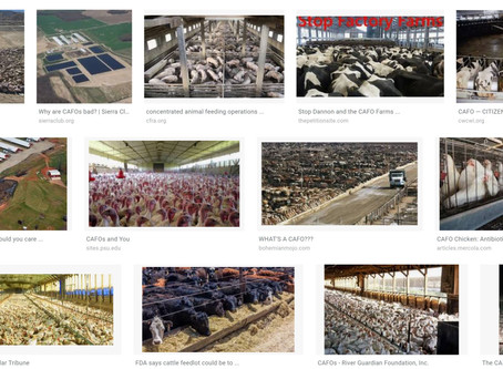 Everything You Didn't Want to Know About CAFO