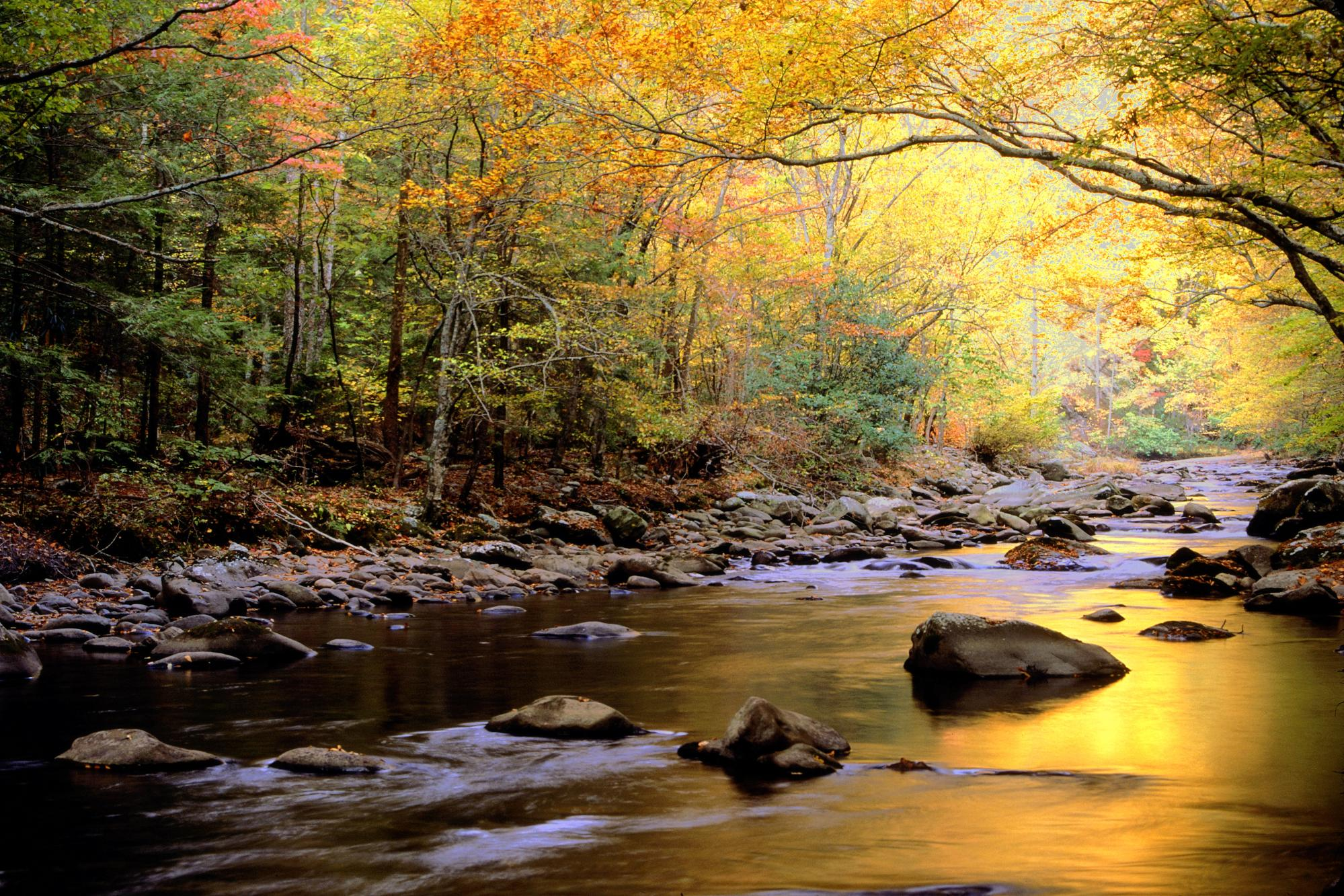 Great-Smoky-Mountains-National-Park-River-Image