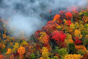 Smoky-Mountaisn-fall-colors.jpg