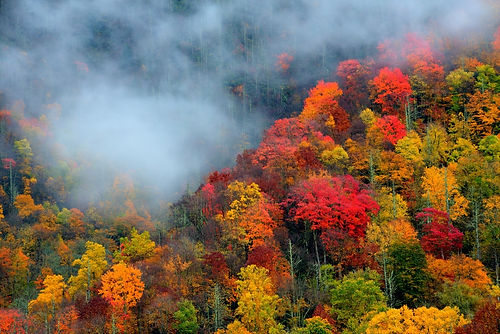 Colors in the Smoky Mountains
