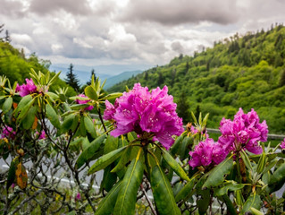 5 Interesting Facts About the Smoky Mountain Wildflowers and Where to Find Them