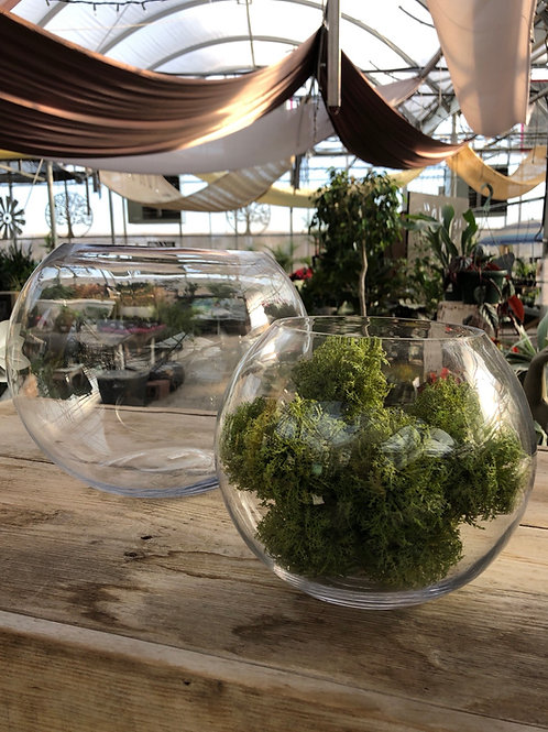 Glass Bowl Planter/Terrarium