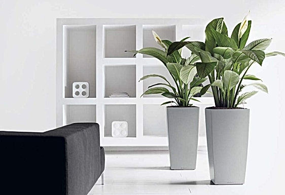 Lechuza Self-Watering Planters