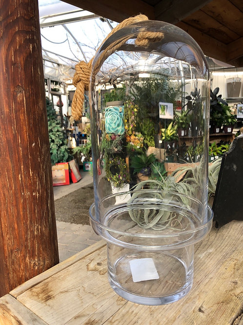 Enclosed Glass Case/Terrarium