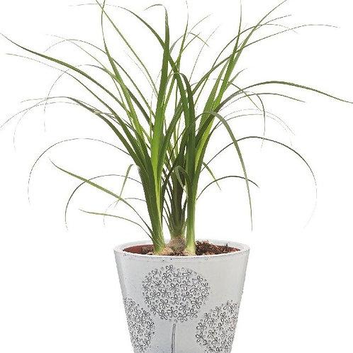 Dandelion Cement Pot