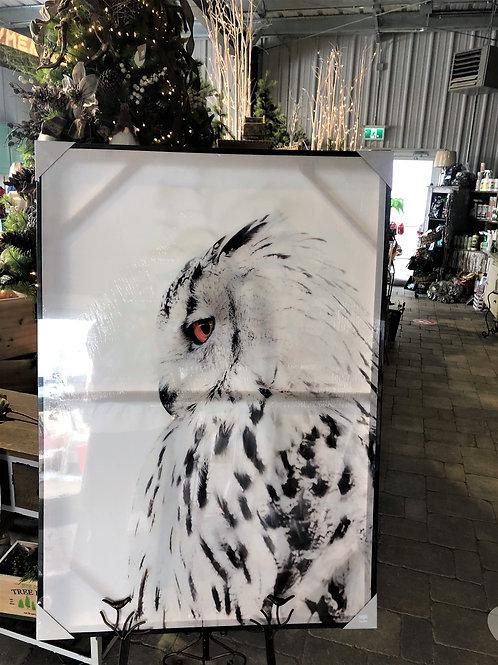 Snow Owl Picture