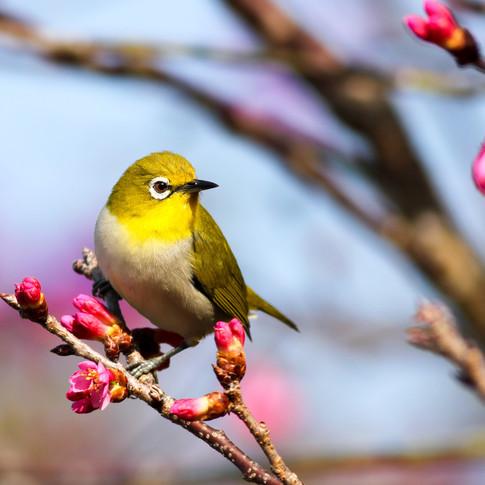 Signs of Spring II: Birds, Bees & Butterflies