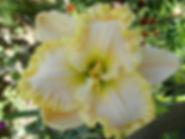 Ruffled Lily.JPG