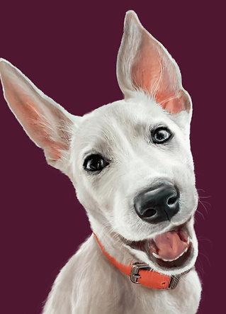 Digital  pet portrait painting (printable pdf+png)