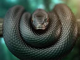 BLACK MAMBA: How to recognize poisonous people