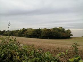 Farnham's Three 'lost' Castles (8.5 miles)