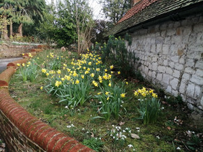 March Newsletter from Farnham Walker