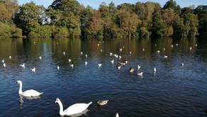 Flocks around Finchamstead (10 miles)