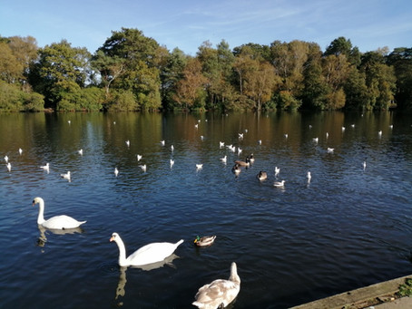 Flocks around Finchamstead (10 miles)