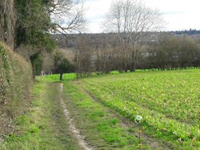 Farnham Park and Old Park (3.5 miles)