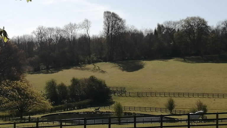 Pilgrimage 3 - Alton to Bishop's Sutton