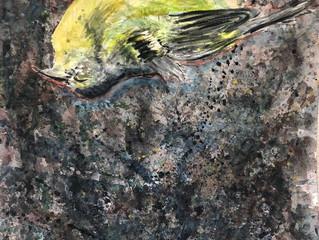 Dead Bird. QP